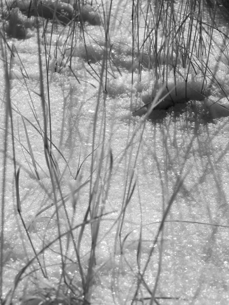 snow-grass2-nm