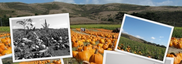 half moon bay - pumpkin festival