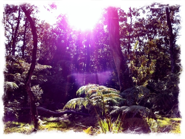 rainforest-1000px